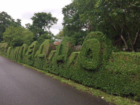 "The ""Hello"" hedge near Gartocharn."