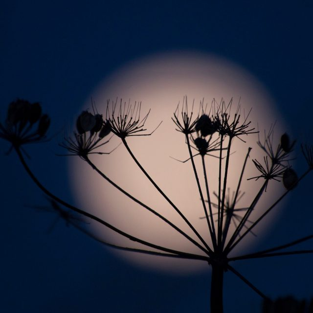 Supermoon setting this morning. https://www.flickr.com/photos/landscapy/