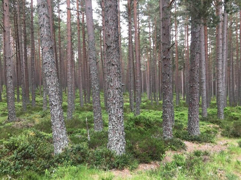 More wonderful woodlands.