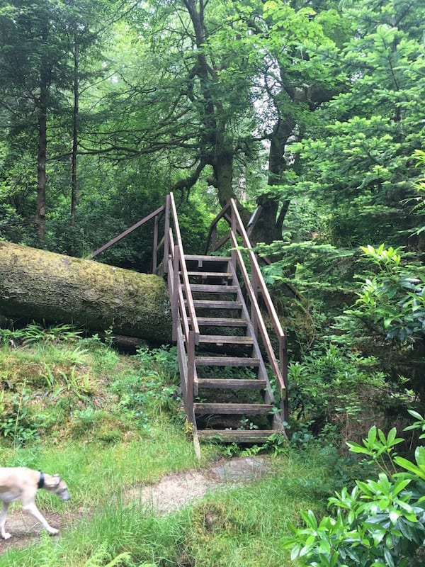 A staircase over a felled tree.