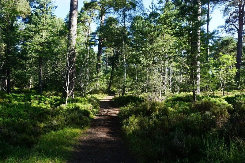 The Moray Way